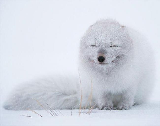 Hayvanlarda  insanlar gibi gülümseyebilir mi? galerisi resim 10
