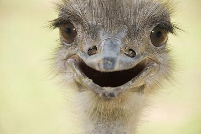 Hayvanlarda  insanlar gibi gülümseyebilir mi? galerisi resim 11
