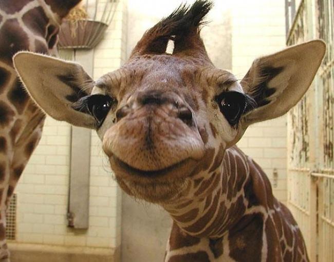 Hayvanlarda  insanlar gibi gülümseyebilir mi? galerisi resim 14