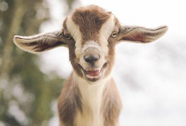 Hayvanlarda  insanlar gibi gülümseyebilir mi? galerisi resim 24