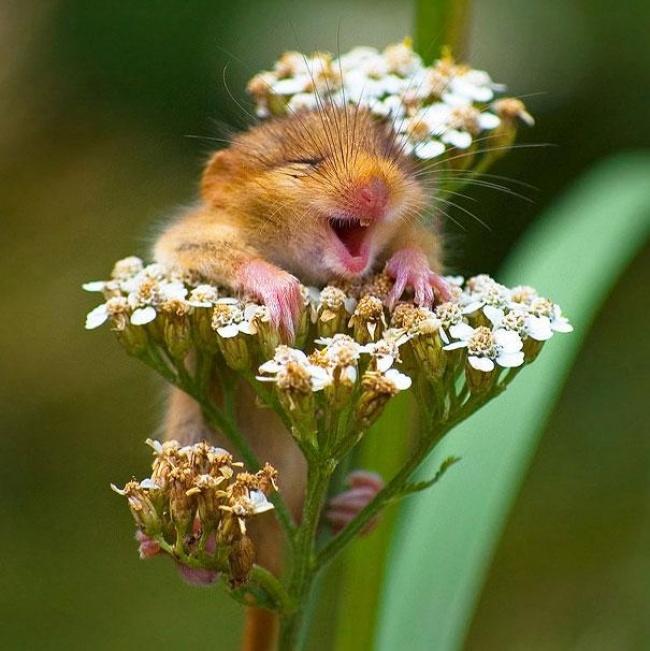 Hayvanlarda  insanlar gibi gülümseyebilir mi? galerisi resim 7