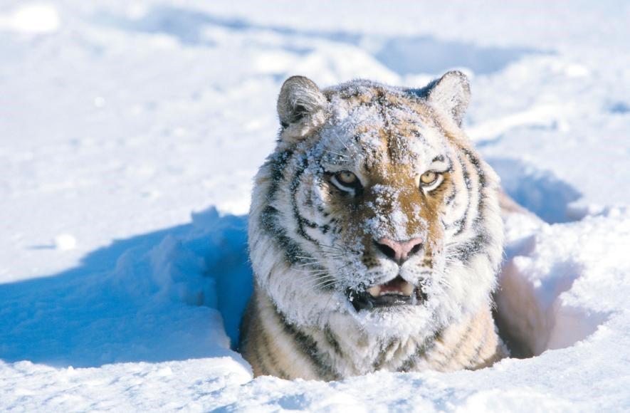 Karda eğlenen hayvanlar galerisi resim 1