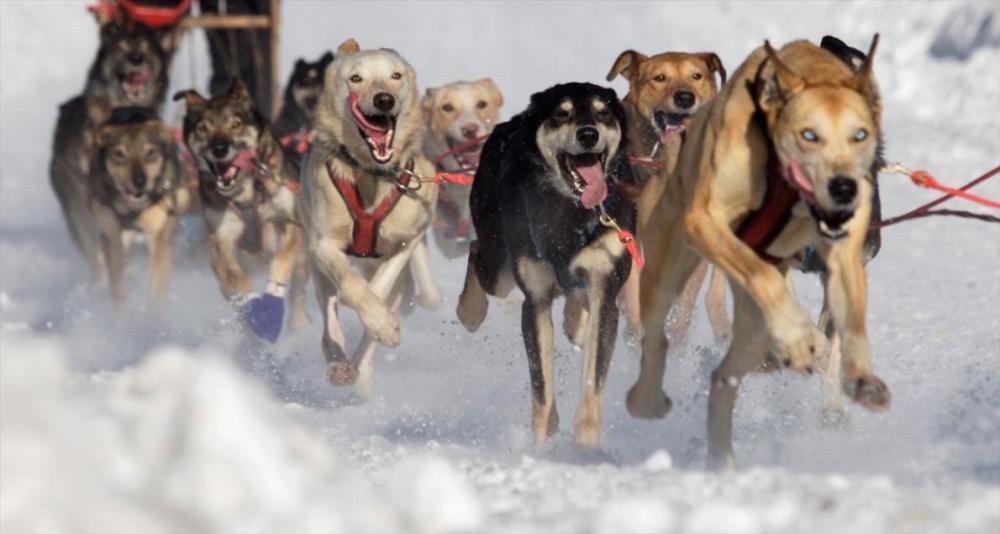 Karda eğlenen hayvanlar galerisi resim 11