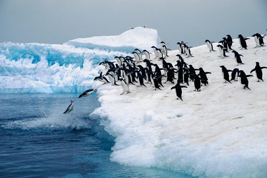 Karda eğlenen hayvanlar galerisi resim 13