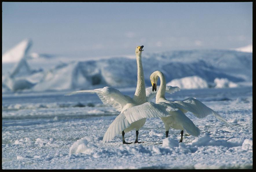 Karda eğlenen hayvanlar galerisi resim 14