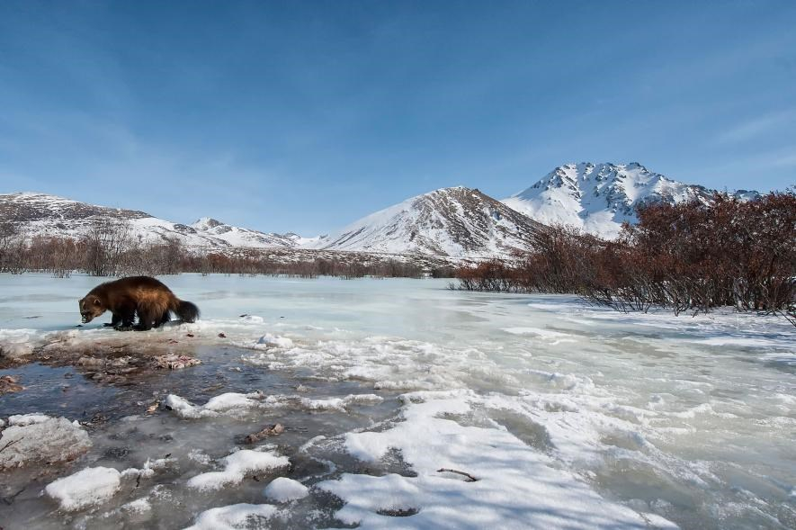 Karda eğlenen hayvanlar galerisi resim 15