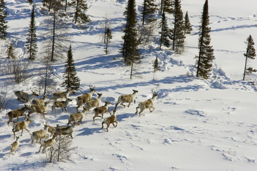 Karda eğlenen hayvanlar galerisi resim 16
