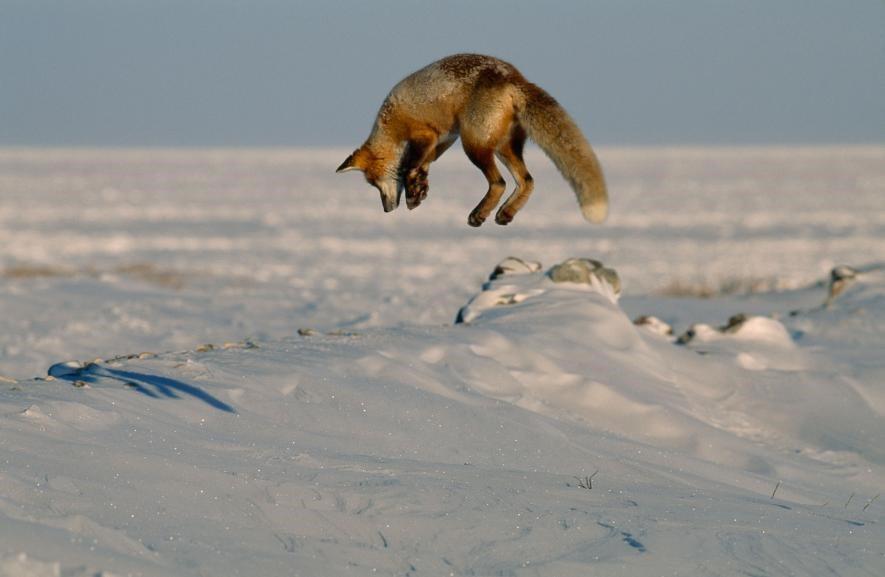 Karda eğlenen hayvanlar galerisi resim 2