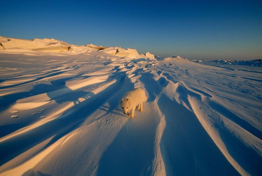 Karda eğlenen hayvanlar galerisi resim 8