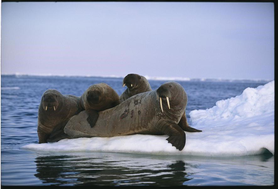 Karda eğlenen hayvanlar galerisi resim 9