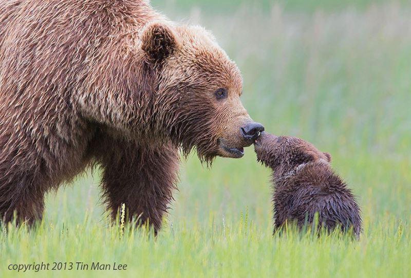 Hayvanların yavru şefkati galerisi resim 15
