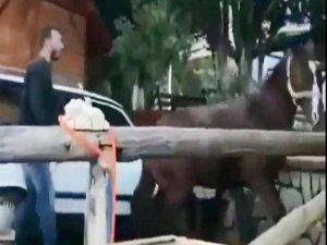 At çiftliğinde skandal!