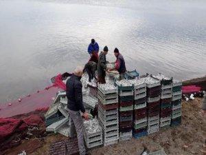 Bursa'da balık şaşkınlığı!
