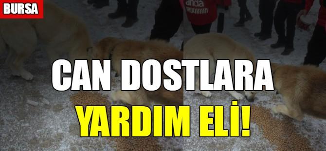 Bursa'da sokak hayvanları unutulmadı