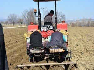 Bursalı çiftçiler patatese yöneldi