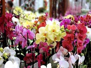 Bu çiçekler şans ve huzur getiriyor