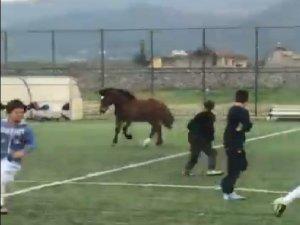 Futbol maçında sahaya at girdi