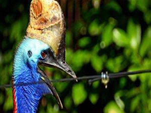 O dünyanın en tehlikeli kuşu