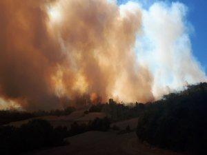 Bursa'da 50 hektar ormanlık alan yandı!