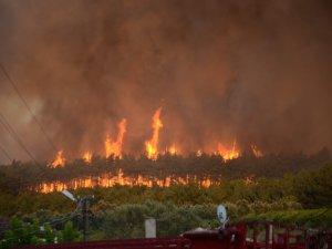 Mudanya'da yanan ormanda fidanlar yükseldi