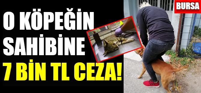 O köpeğin sahibine 7 bin lira ceza kesildi