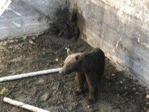 Bursa'daki o ayılar artık doğal ortamlarında