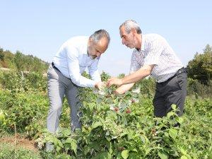 Bursalı çiftçinin alın teri dövize dönüşüyor