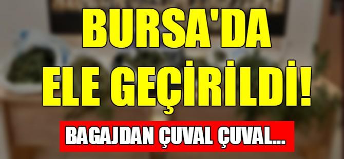 Bursa'da çuval çuval esrar ele geçirildi