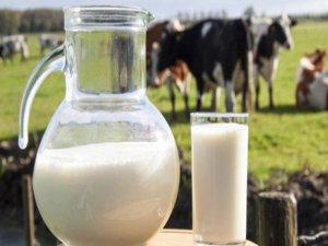 Uzmanlar Süt tüketimine dikkat çekiyor