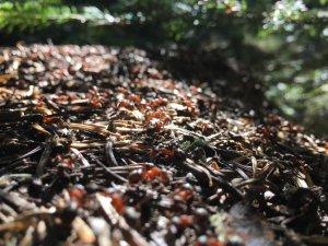 Uludağ'ın orman bekçileri