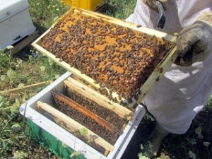 """İlaçlamada """"arı"""" uyarısı!"""