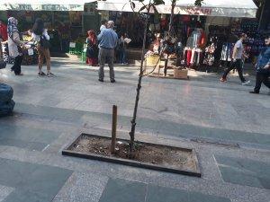 Ağaçla dövüşen garip adam