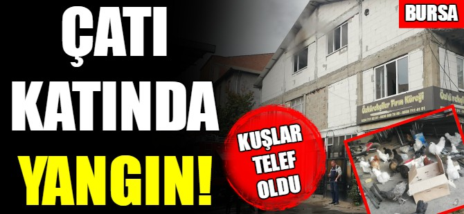 Bursa'da yangın paniği!