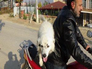 Bu köpek motosiklet hastası