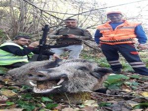 Bursa'da yaban domuzu avı!