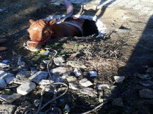 Çukura düşen atı itfaiye kurtardı