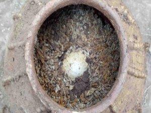 Çin'de 500 yıllık yumurta bulundu