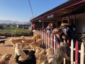 Bursa'da sokak hayvanlarına destek