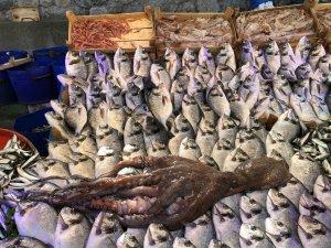 Bursa'da dev ahtapot!