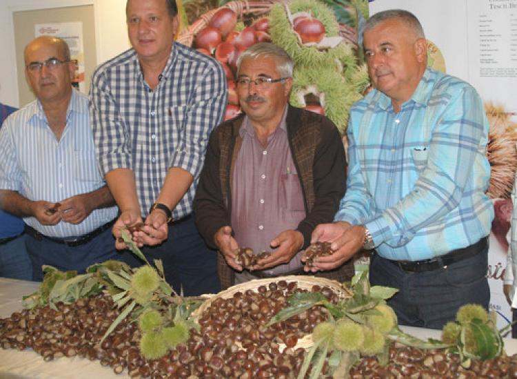Aydın'dan kestane ihracatı başladı