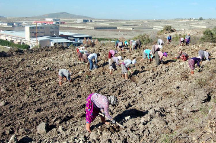 Aliağa Organize Sanayi Bölgesi'ne iki yılda 140 bin fidan dikildi