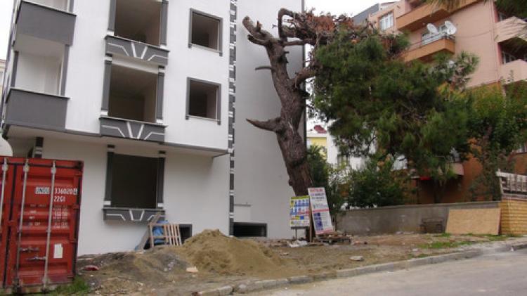 Tarihi ağaçların yerine bina dikildi