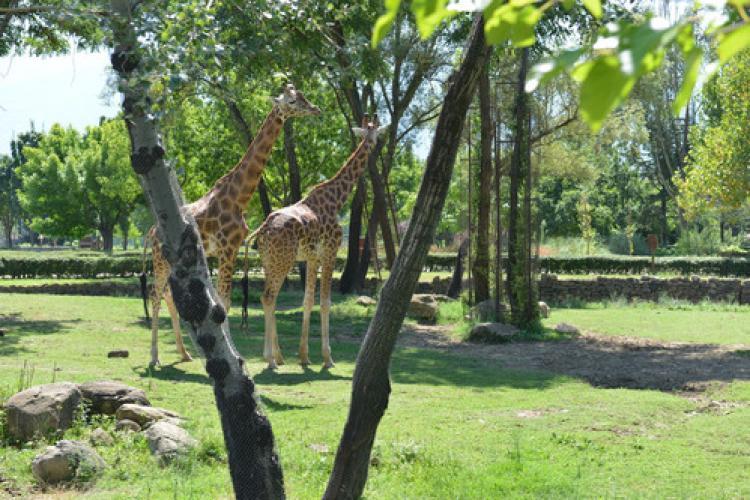 Hayvanat Bahçesi'ne giriş 3 gün ücretsiz
