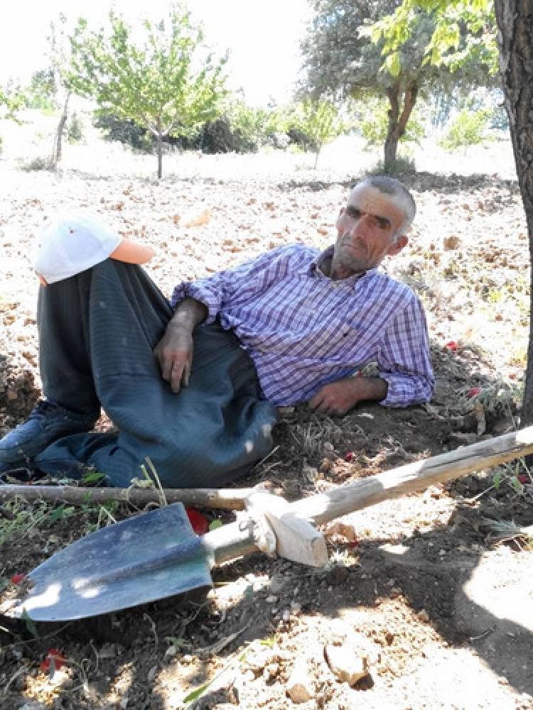 Ağaçtan düşen adam öldü