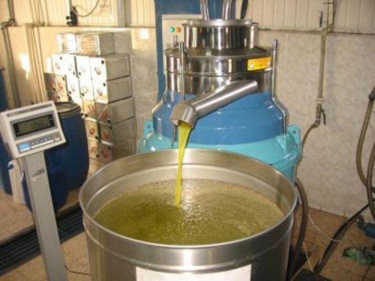 Bir ton zeytin yağı çalındı