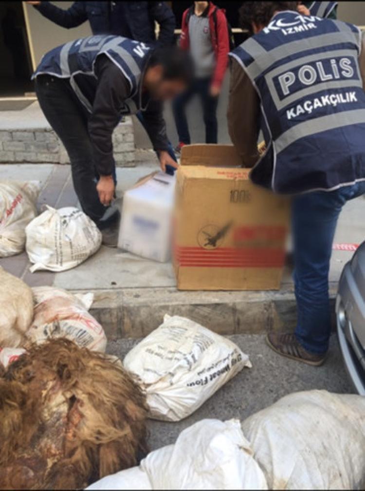 Koyun postlarıyla gizlenmiş kaçak sigaralar ele geçirildi