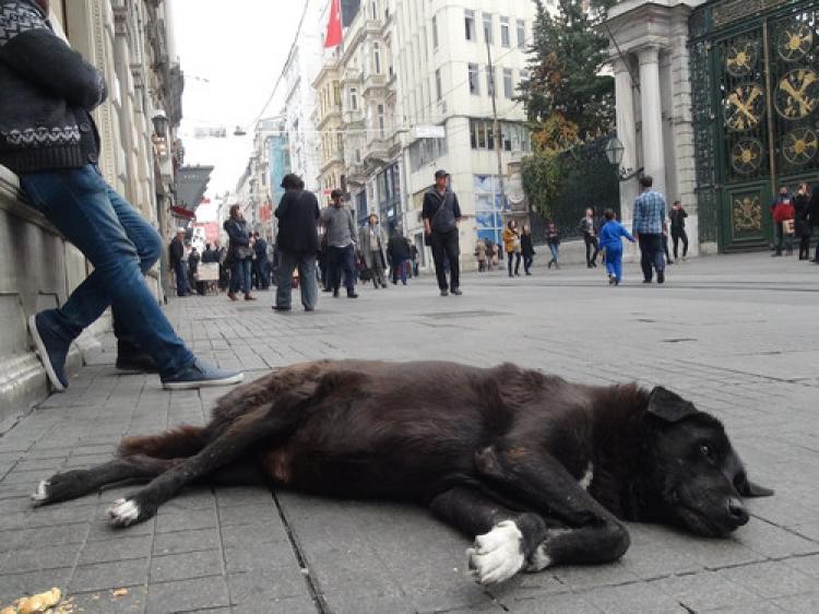 Taksim'de ölü takliti yapan köpek yoğun ilgi gördü