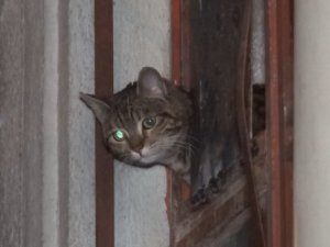 Bursa'da kedi operasyonu