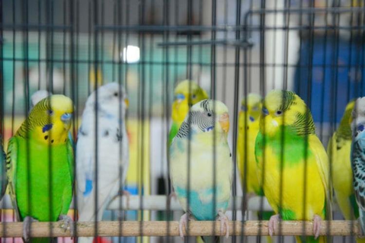 Bursa'da kuşlar, Portekiz için yarıştı