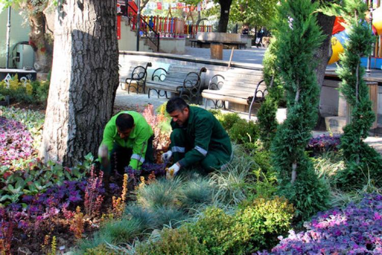 Ankara Kuğulu Park'ına 6 bin kış çiçeği dikildi